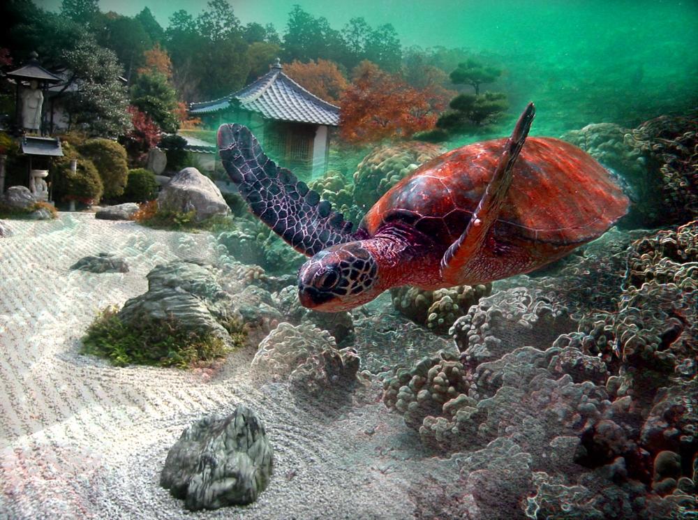 turtle-garden